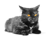 Black cat. On the white background stock images