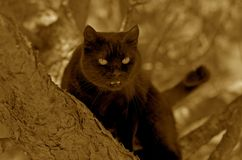 Black cat. Malicious black cat sitting on a tree Royalty Free Stock Photo