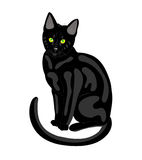 Black cat. Stock Photos