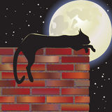 Black cat. Nocturnal black  cat  and moon Stock Photo