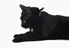 Black cat. Lying  on white Royalty Free Stock Photography