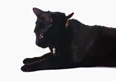 Black cat Royalty Free Stock Photography