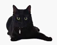Black cat. With yellow eyes  on white Royalty Free Stock Photo