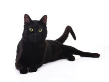 Black cat. With yellow eyes lying  on white Stock Photo