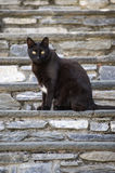 Black cat. With yellow eyes on a staircase stock photography