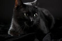 Black cat Stock Photo