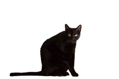 Black cat Royalty Free Stock Image