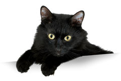 Black Cat. With white banner stock images