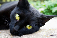 A black cat. Stares with yellow magic eyes Stock Photo