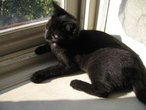 Black Cat. On window sill royalty free stock photography