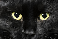 Black cat. Domestic animals: close-up of cat eyes stock photography