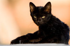 Black cat. Image of a cat is staring at us Stock Photo