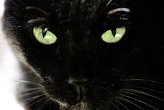 Black cat. And beautiful eyes royalty free stock photo