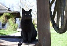 Black cat Royalty Free Stock Photos