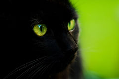 Black cat. With green eyes on green background royalty free stock images