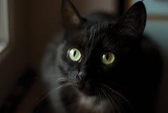 Free Black Cat Stock Photo - 5670510