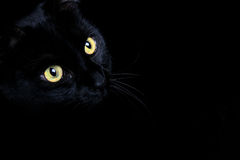 Black Cat. A black cat captured against a black background stock image