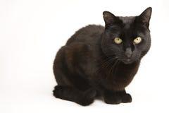 Black cat Royalty Free Stock Image