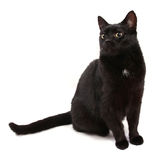 Black cat. A black cat isolated on a white background stock images