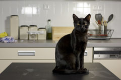 Black cat. Cat at home - a black cat sitting on a black table with kitchen desk in the background - living in the house - apartment Stock Photos