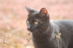Black Cat. Photo of a black cat outside staring at something royalty free stock image