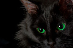 Black cat. With green eyes on a black background royalty free stock photos