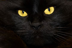 Black Cat. Yellow eyes cat royalty free stock photography