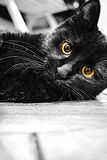 Black cat. Adorable black cat with yellow eyes. The eyes color is natural Royalty Free Stock Photography