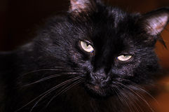 Black Cat with Aggravated Look. Close-up shot of my Moms Black cat.  She was getting aggravated with me for taking her photo Royalty Free Stock Photography