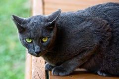 Black cat on alert Stock Photography