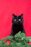 Black Cat And Christmas Decorations Royalty Free Stock Photos