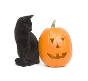 Black Cat And Pumpkin Royalty Free Stock Images
