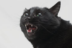 Black cat in anger Royalty Free Stock Photos