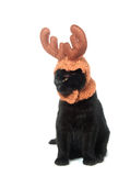 Black cat with antler hat Stock Photo