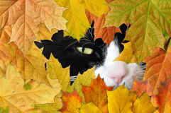 Black cat and autumn leaves Royalty Free Stock Photography