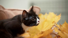 Black cat and autumn leaves Stock Images