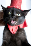 Black cat back Royalty Free Stock Photos