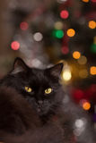 Black cat on the background bokeh.  Royalty Free Stock Photo
