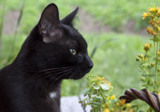 Black cat on a background of grass Royalty Free Stock Photography