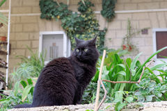 Black cat on a background of green plants. Yellow expressive eyes Royalty Free Stock Images