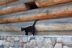 Black cat on a background log walls. Stock Photo