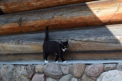 Black cat on a background log walls. Stock Images