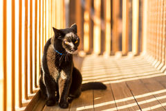 Black cat on a balcony Royalty Free Stock Photography