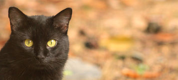 Black Cat-banner Royalty Free Stock Photography