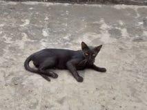 Black cat. A beautiful black cat royalty free stock photo