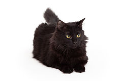 Black Cat With Beautiful Eyes Laying And Looking Forward Royalty Free Stock Photography