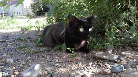 Black cat with beautiful eyes lies under a tree Stock Photo