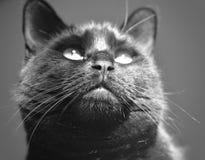 Black Cat. Beautiful black cat gazing at the sun Stock Photo