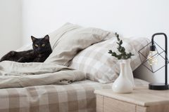 Black cat on bed. In bedroom royalty free stock images