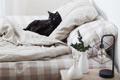 Black cat on bed. The black cat on bed in bedroom royalty free stock photography